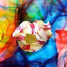 Tulip Swirl by Leanne Allen