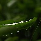 water drops 1 by Elisabeth Dubois