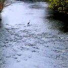 Heron in stream  by shelleybabe2