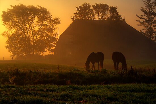Horses in the Morning Light by Jo Nijenhuis