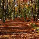 beech walk by Ilapin