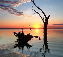 Lake Bonney Sunrise by Bill  Robinson