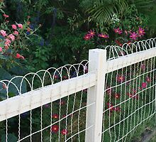 Cottage Fence in Southport by aussiebushstick