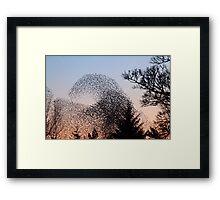 Murmuration of Starlings 3 at Gretna Framed Print