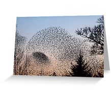 Murmuration of Starlings at Gretna 4 Greeting Card