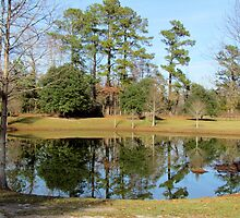 Pond In The Front Yard by Cynthia48