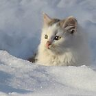 Snow Kitten by PatChristensen
