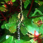 Alien Garden Spider by Annlynn Ward