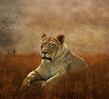 The Lioness by swaby