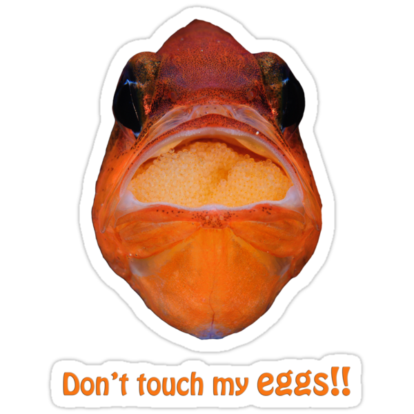 Don't touch my eggs! by Esteban  Toré