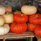Pumpkins by shakey