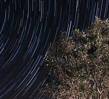 Startrails over an olive tree by Eduardo Ventura