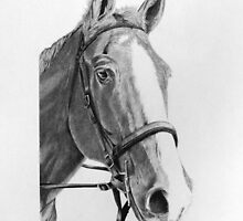 Commissioned Horse Portrait by J.D. Bowman