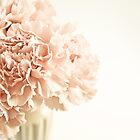 Soft Pink Carnation in Vase by Susan Westervelt