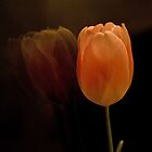 Tulip Reflection by Susan Westervelt