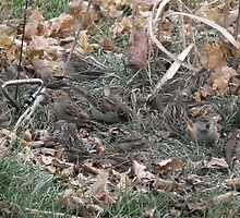 Seventeen Sparrows by Deb Fedeler