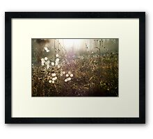 Sunkissed Autumn Colors Framed Print