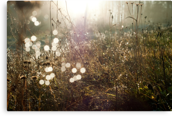 Sunkissed Autumn Colors by Bjarte Edvardsen