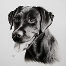 Black Labrador by Peter Lawton
