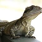 lizard mt barney by aussieazsx