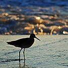 Shorebird in the Morning by Robin Lee