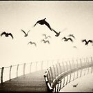 Wild geese by Lenka