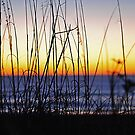 Sunrise Through the Dunes by Robin Lee