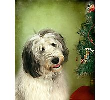 """"""" I Hope There Really Is A Santa Paws . . ."""" Photographic Print"""