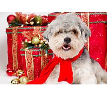 A nice Christmas for Cuddles Photographic Print