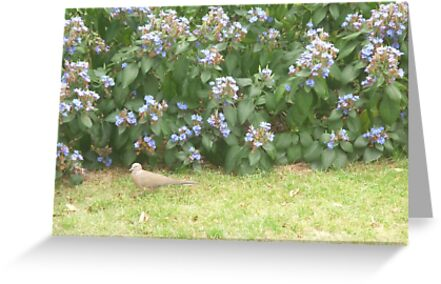 Dove walking into bushes by Joseph Green