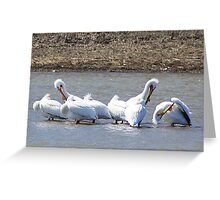 The Pelicans Are Back Greeting Card