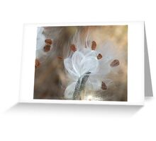 Milkweed Seeds Greeting Card