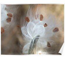 Milkweed Seeds Poster
