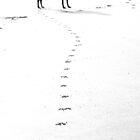 Pawprint Path by Sally J Hunter