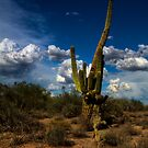 Sonoran Desert by DHParsons
