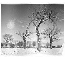 Twisted Cherry Trees in Winter Poster