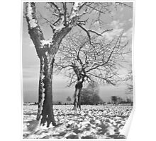 Old Cherry Trees in Winter Poster
