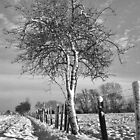 Hawthorn and fence in Winter by Steven House