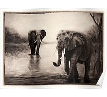 African Elephants at Sunset Poster