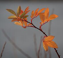The Last Leaves by Lynn Wiles