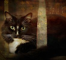Renaissance cat by Lynn Starner