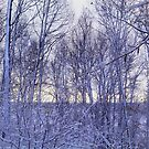 Backyard Snowy Morning by jrier