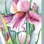Purple Iris iPhone Case by Sandra Gale