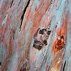 Rainbow Eucalyptus by Mandy Brown