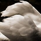 Swan Wings by Gail Falcon