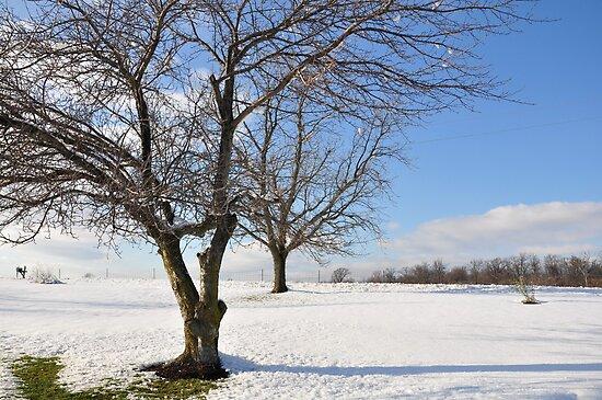 Winter trees 11/30/2011 by mltrue
