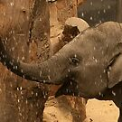 Baby elephant water fun  by steppeland