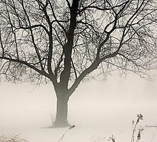 January Foggy Day by Yannik Hay