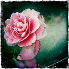 Forgotten Flowers by Shaynelee