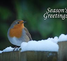 Season's Greetings - Robin by Gillian Cross